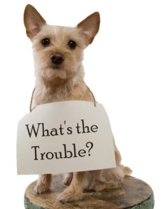 Whats the Trouble Dog-1